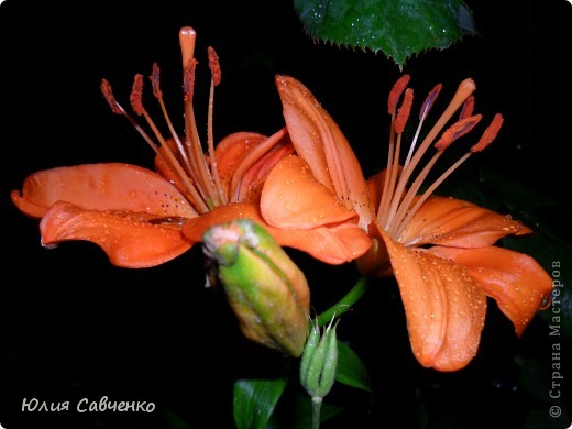 Кто не верит, всех зову я в сад,  Видите, моргая еле-еле,  На людей доверчиво глядят  Все цветы, как дети в колыбели.  В душу нам глядят цветы земли,  Добрым взглядом всех кто с нами рядом.  Или же потусторонним взглядом  Всех друзей, что навсегда ушли. ( Расул Гамзатов)  фото 21