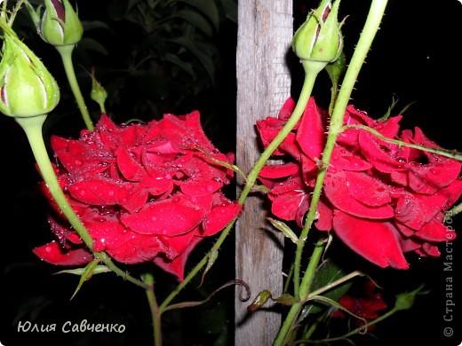 Кто не верит, всех зову я в сад,  Видите, моргая еле-еле,  На людей доверчиво глядят  Все цветы, как дети в колыбели.  В душу нам глядят цветы земли,  Добрым взглядом всех кто с нами рядом.  Или же потусторонним взглядом  Всех друзей, что навсегда ушли. ( Расул Гамзатов)  фото 16