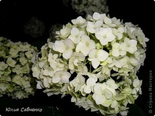 Кто не верит, всех зову я в сад,  Видите, моргая еле-еле,  На людей доверчиво глядят  Все цветы, как дети в колыбели.  В душу нам глядят цветы земли,  Добрым взглядом всех кто с нами рядом.  Или же потусторонним взглядом  Всех друзей, что навсегда ушли. ( Расул Гамзатов)  фото 24