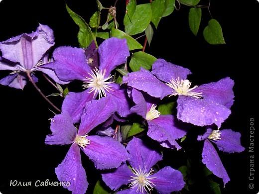 Кто не верит, всех зову я в сад,  Видите, моргая еле-еле,  На людей доверчиво глядят  Все цветы, как дети в колыбели.  В душу нам глядят цветы земли,  Добрым взглядом всех кто с нами рядом.  Или же потусторонним взглядом  Всех друзей, что навсегда ушли. ( Расул Гамзатов)  фото 22