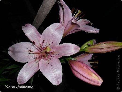 Кто не верит, всех зову я в сад,  Видите, моргая еле-еле,  На людей доверчиво глядят  Все цветы, как дети в колыбели.  В душу нам глядят цветы земли,  Добрым взглядом всех кто с нами рядом.  Или же потусторонним взглядом  Всех друзей, что навсегда ушли. ( Расул Гамзатов)  фото 26