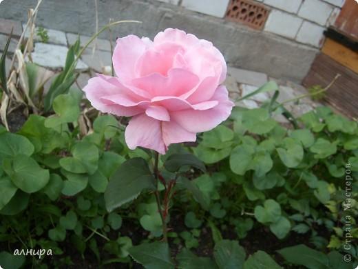 Цветов много не бывает! фото 4