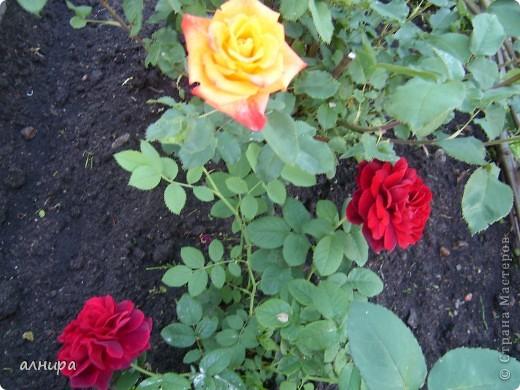 Цветов много не бывает! фото 7