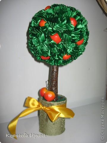 Дерево черешни фото 3
