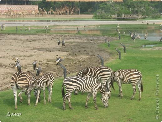 Одним из пунктов моего тайского путешествия был сафари-парк в Бангкоке. фото 3