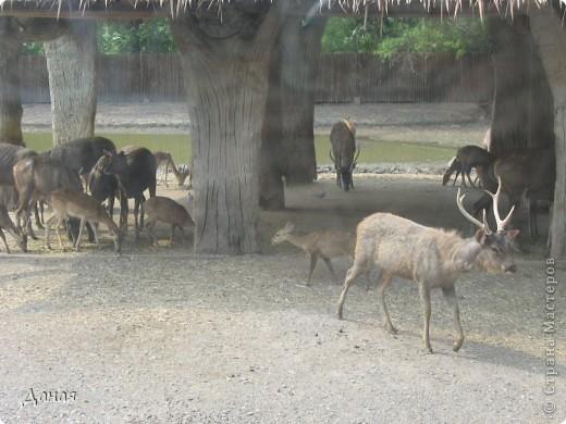 Одним из пунктов моего тайского путешествия был сафари-парк в Бангкоке. фото 8
