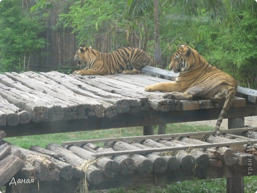 Одним из пунктов моего тайского путешествия был сафари-парк в Бангкоке. фото 13