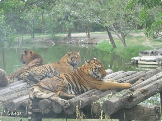 Одним из пунктов моего тайского путешествия был сафари-парк в Бангкоке. фото 14