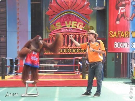 Одним из пунктов моего тайского путешествия был сафари-парк в Бангкоке. фото 21