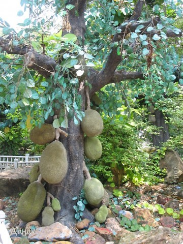 Одним из пунктов моего тайского путешествия был сафари-парк в Бангкоке. фото 38