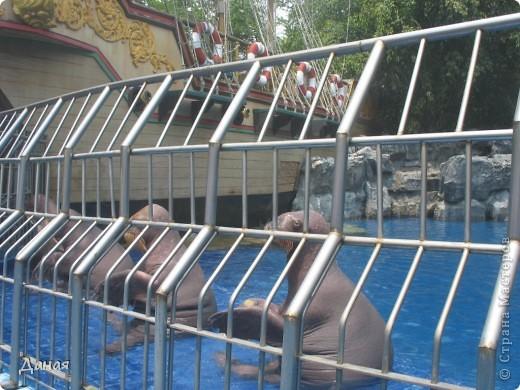 Одним из пунктов моего тайского путешествия был сафари-парк в Бангкоке. фото 39