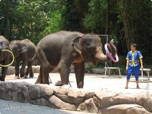 Одним из пунктов моего тайского путешествия был сафари-парк в Бангкоке. фото 40