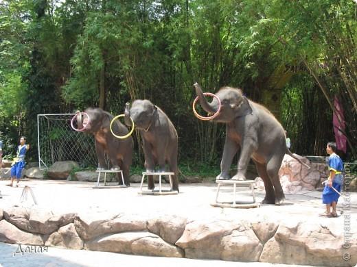 Одним из пунктов моего тайского путешествия был сафари-парк в Бангкоке. фото 41
