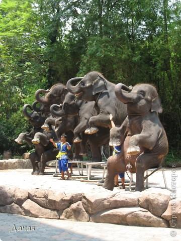 Одним из пунктов моего тайского путешествия был сафари-парк в Бангкоке. фото 42