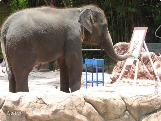 Одним из пунктов моего тайского путешествия был сафари-парк в Бангкоке. фото 43