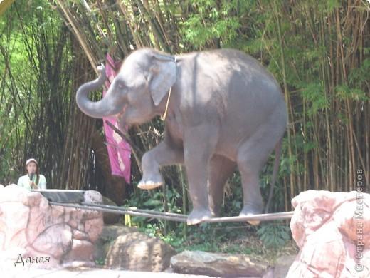 Одним из пунктов моего тайского путешествия был сафари-парк в Бангкоке. фото 45