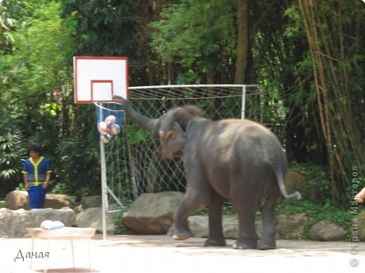 Одним из пунктов моего тайского путешествия был сафари-парк в Бангкоке. фото 46