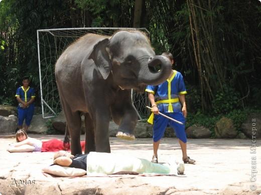 Одним из пунктов моего тайского путешествия был сафари-парк в Бангкоке. фото 47