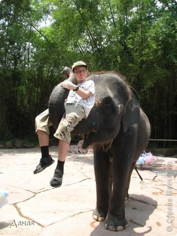 Одним из пунктов моего тайского путешествия был сафари-парк в Бангкоке. фото 48