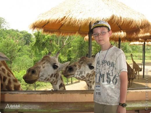 Одним из пунктов моего тайского путешествия был сафари-парк в Бангкоке. фото 49