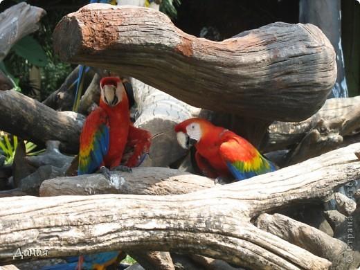 Одним из пунктов моего тайского путешествия был сафари-парк в Бангкоке. фото 61
