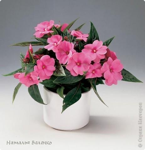 Добрый день!!! Сегодня у меня бальзамин - комнатное растение. Размер работы 20*25 см. фото 10