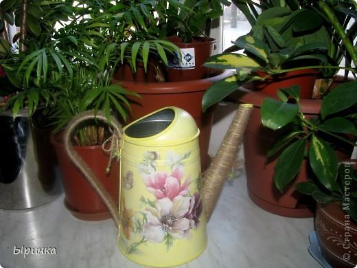 Леечка цветочно-лимонная... родилась в конце мая )))) фото 3