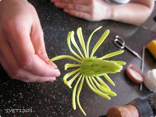 Вот это результат дружеских посиделок по лепке. А лепили мы цветок тюльпанного дерева. Сидели вдвоём с Олей поэтому два цветка :Олин нежный левый, а мой яркий правый!  фото 9