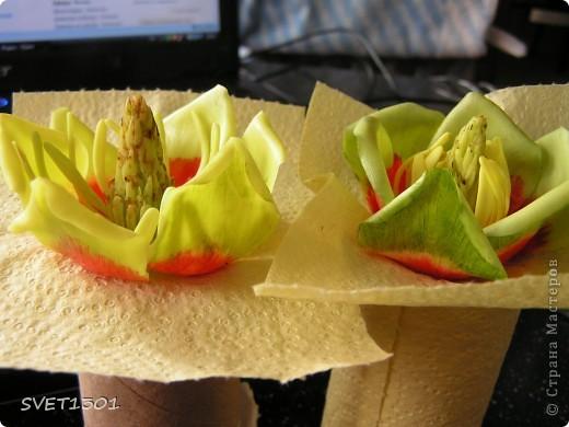Вот это результат дружеских посиделок по лепке. А лепили мы цветок тюльпанного дерева. Сидели вдвоём с Олей поэтому два цветка :Олин нежный левый, а мой яркий правый!  фото 14