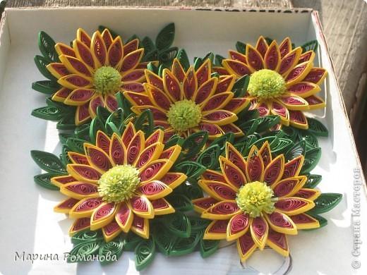Знакомьтесь - это мои хризантемы! фото 1