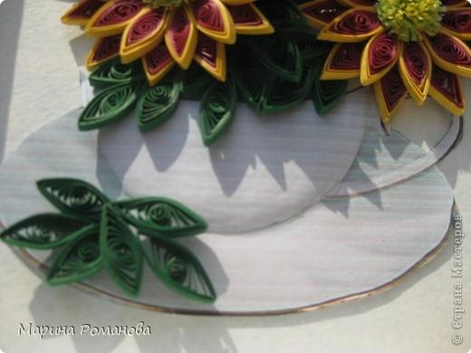 Знакомьтесь - это мои хризантемы! фото 5