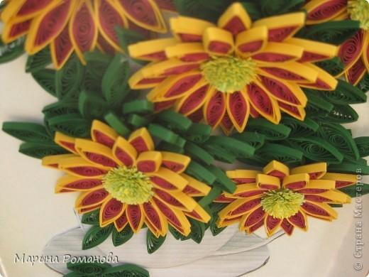 Знакомьтесь - это мои хризантемы! фото 6