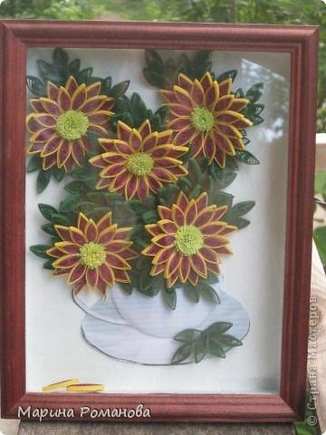 Знакомьтесь - это мои хризантемы! фото 7