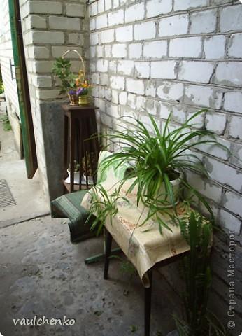 """Дворик у нас не большой. Но для цветов местечко всегда найдем! Первой из летних расцвела лилия """"Барселона"""" фото 24"""