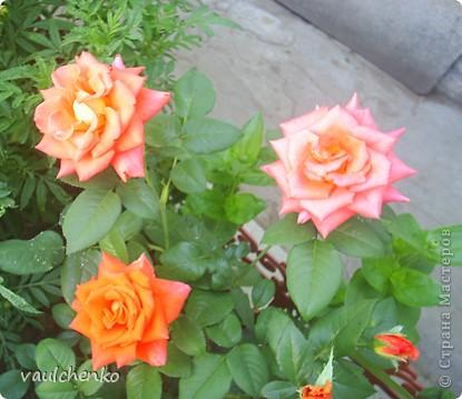 """Дворик у нас не большой. Но для цветов местечко всегда найдем! Первой из летних расцвела лилия """"Барселона"""" фото 9"""