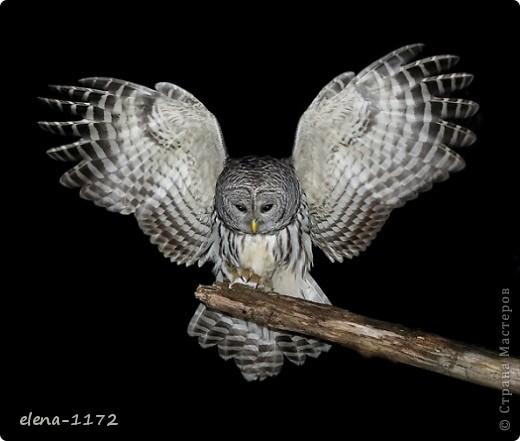 1. Решила замахнуться на птиц.  фото 10