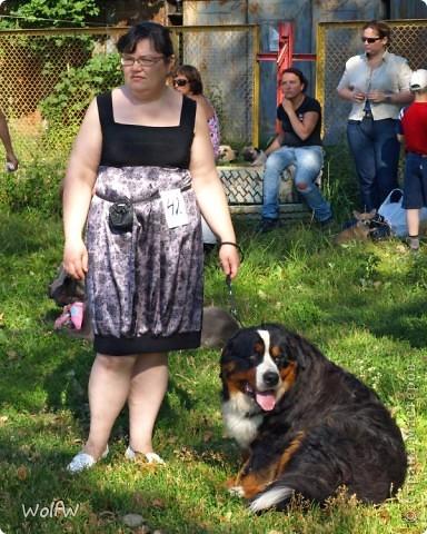 Очередное подтверждение насколько собаки и хозяева похожи фото 1