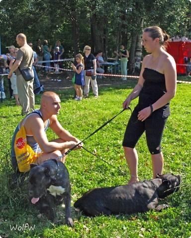 Очередное подтверждение насколько собаки и хозяева похожи фото 2