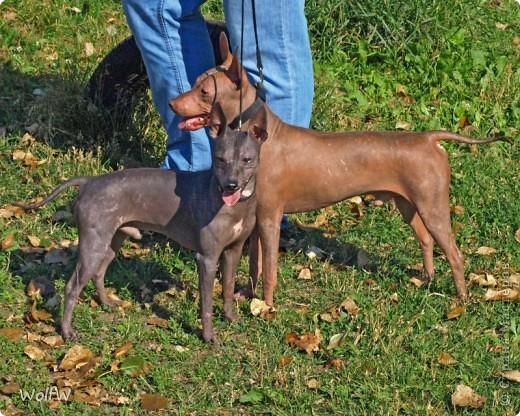 Очередное подтверждение насколько собаки и хозяева похожи фото 3