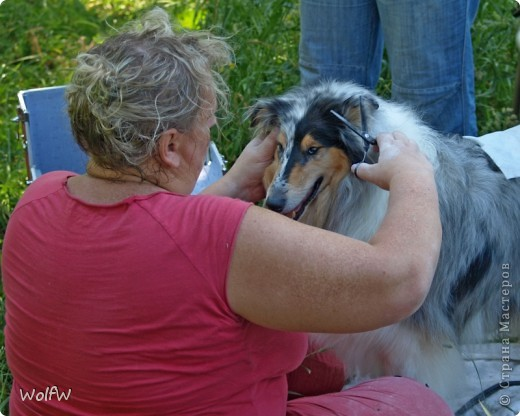 Очередное подтверждение насколько собаки и хозяева похожи фото 15