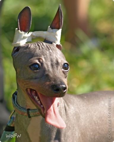 Очередное подтверждение насколько собаки и хозяева похожи фото 17
