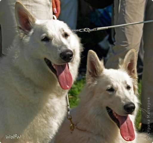 Очередное подтверждение насколько собаки и хозяева похожи фото 18