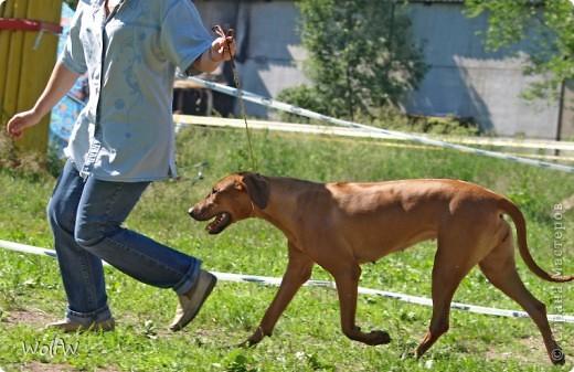 Очередное подтверждение насколько собаки и хозяева похожи фото 23