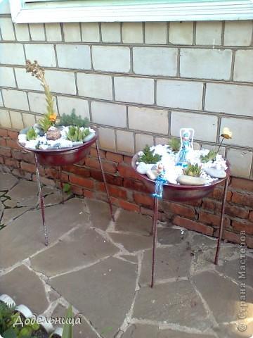 Мои сады сукулентов. фото 1