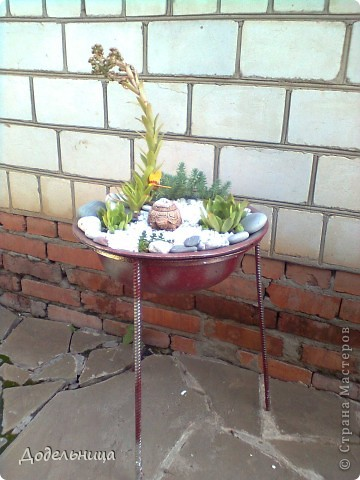 Мои сады сукулентов. фото 3