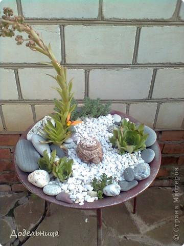 Мои сады сукулентов. фото 5