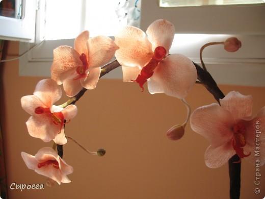 Веточка орхидеи. фото 1