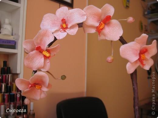 Веточка орхидеи. фото 2