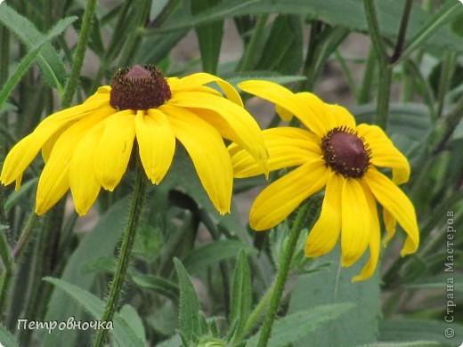 А лето на Кубани в этом году странное! Весь июнь шли дожди, было прохладно! Но цветы роскошные и радуют глаз. фото 9