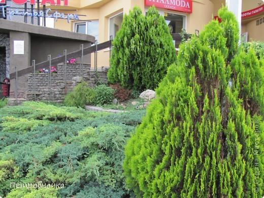 А лето на Кубани в этом году странное! Весь июнь шли дожди, было прохладно! Но цветы роскошные и радуют глаз. фото 15